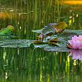 Pink Lotus Flower by Beth Sargent
