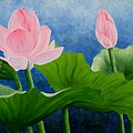 Pink Lotus On Blue Sky by Darla Brock