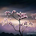 Pink Magnolia - Dark Version by Peter Awax