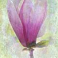 Pink Magnolia by Judi Bagwell