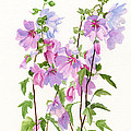 Pink Mallow Flowers by Sharon Freeman