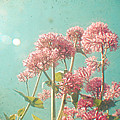 Pink Milkweed by Cassia Beck