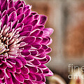 Pink Mum by Lana Trussell