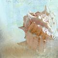 Pink Murex Seashell by Betty LaRue