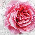 Pink On White by Ben Yassa