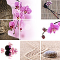 Pink Orchid And Buddha Collage by Delphimages Photo Creations