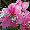 Pink Orchid by Lena Photo Art