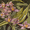 Pink Orchids by Artimis Alcyone