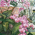 Pink Orchids by Lisa Prusinski