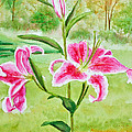 Pink Oriental Lillies by Kathryn Duncan