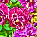 Pink Pansies by Jeanne May
