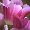 Pink Passion by Deb Halloran