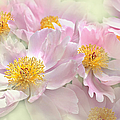 Pink Peony Flowers Parade by Jennie Marie Schell
