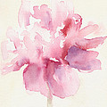Pink Peony Watercolor Paintings Of Flowers by Beverly Brown