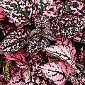 Pink - Plant - Petals by D Hackett
