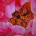 Pink Petals by Dennis Reagan