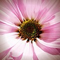 Pink Petals by Michele Monk