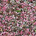 Pink Petals On Stones  by Aimee L Maher ALM GALLERY