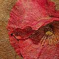 Pink Poppy Gold Leaf by Phyllis Denton