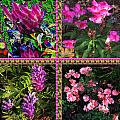 Pink Purple Flowers Captured At The Riverside Ridge At Oakville Ontario Canada Collage Beautiful     by Navin Joshi