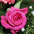 Pink Rose Adds Colour by Perggals - Stacey Turner