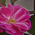 Pink Rose Digital Art 2 by Walter Herrit