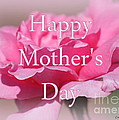 Pink Rose Mother's Day Card by Carol Groenen