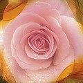 Pink Rose Romance  by Susan Garren