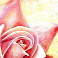 Pink Rose Panel Two Of Four by Linda Mears