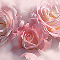 Pink Roses In The Mist by Jennie Marie Schell
