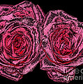 Pink Roses With Dark And Rough Chrome  Effects by Rose Santuci-Sofranko