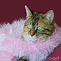 Pink Scarf by Kathleen Struckle