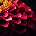 Pink Secret by Zinvolle Art