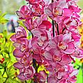 Pink Shadows by Elvis Vaughn