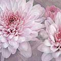 Pink Sugar by Leda Robertson