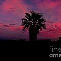 Pink Sunset by Robert Bales