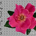 Pink Tea Rose Love by Renee Marie Martinez