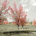 Pink Trees by Cindy Roesinger