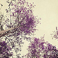 Pink Trees by Priska Wettstein