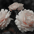 Pink Trio by Michelle Joseph-Long