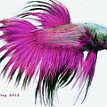 Pink Tropical Fish by Bruce Nutting