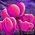 Pink Tulips On Purple by Tim Gilliland