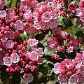 Pink Umbrellas by Sonali Gangane