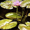 A Waterlily Reflection by Lehua Pekelo-Stearns