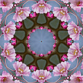 Pink Weeping Cherry Blossom Kaleidoscope by Kathy Clark