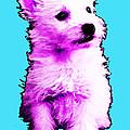 Pink Westie - West Highland Terrier Art By Sharon Cummings by Sharon Cummings