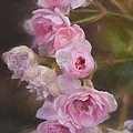 Pink Winter Roses One by Alice Gipson