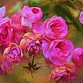 Pink Winter Roses Three by Alice Gipson