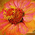 Pink Flower Wall Art Zinnia Floral Fine Art by Carol F Austin