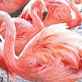 Pinked Flamingos by Alice Gipson